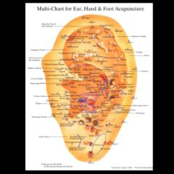 Acupuncture Wall Charts - Multi Chart for Ear, Hand and Foot